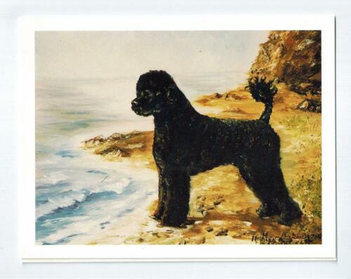 New Portuguese Water Dog By Sea Notecard 6 Note Cards 6 Envelopes Ruth Maystead