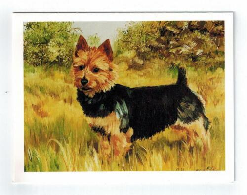 New Australian Terrier in Field Notecard Set - 6 Note Cards By Ruth Maystead
