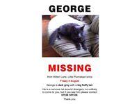 George - still missing!!