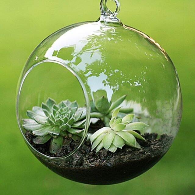 10cm Glass Hanging Planter Air Plant Terrarium Globe Container (R) wedding  decor - 10 Cm Glass Hanging Planter Air Plant Terrarium Globe Container F