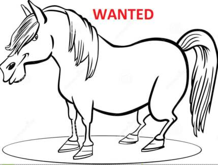 Wanted Grey/White or Creamy Pony 11 - 13hh Cordalba Bundaberg Surrounds Preview