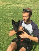 Sutherland - Cronulla Dog walking services Caringbah Sutherland Area Preview