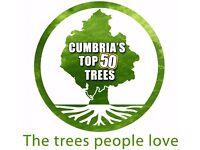 Tree Volunteer