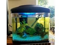 Fish tank/ Aquarium with tropical fish