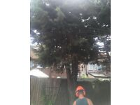 MandM Garden and tree surgeon London