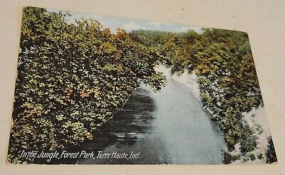 In the jungle Forest Park Terre Haute Indiana postcard 1907
