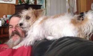 MISSING  FEMALE JACK RUSSEL Whiskey Clayton South Kingston Area Preview