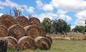 round hay bales for mulch Gracemere Rockhampton City Preview