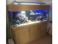 Extra Large full Marine Aquarium setup, £550 ono - priced to sell