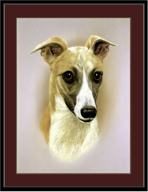 English Print Vintage Pet Whippet Dog Head Study Art Poster Picture