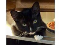 Substantial reward for STOLEN cat in Calne