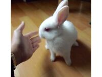 Adorable baby rabbits looking for loving homes