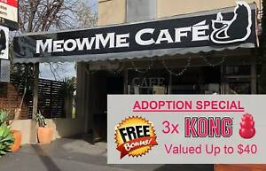 Cat & Kitten Adoptions at Meow Me Cat Cafe