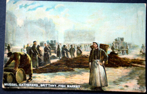 48296 Ak Mussel Gatherers Brittany Fish Market Woman With Basket On