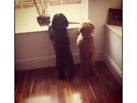 Posh Paws Luxury Home Dog Boarding/Dog Daycare/Dog Walking/Home Visit/ Oswaldtwistle, Accrington