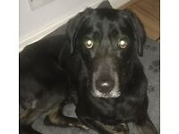 Loving Home Needed For Rakon - 4 Year Old Male - Perfect Paws Dog Sanctuary