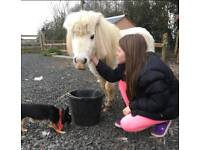 Pony free to good home