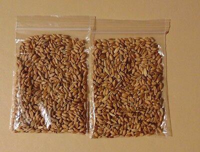 2Cat Brand organic cat grass seeds mix (wheat, oats, barley, flax)- 1400 seeds