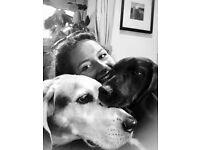 Experienced Pet Sitter/Walker Brighton