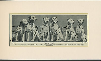 DALMATIAN GROUP OF PUPPIES OLD 1930's DOG PRINT MOUNTED READY TO FRAME