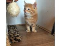 3 Beautiful kittens!!!
