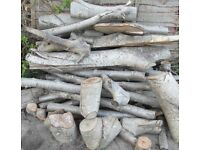 Quantity walnut tree logs for firewood, wood burners, turning, carving