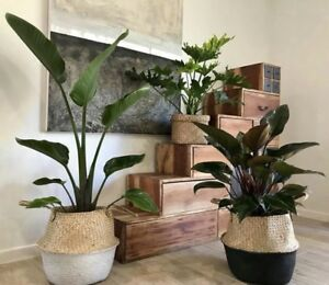 Gorgeous healthy indoor plants. Prices & Package deal in description