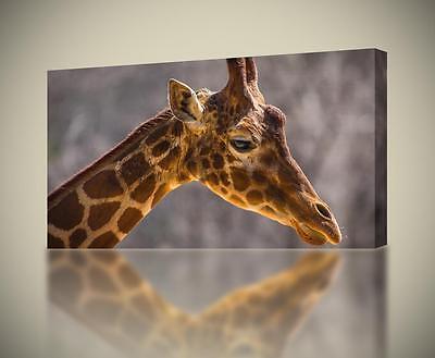 Giraffe Face CANVAS PRINT Wall Art Home Decor Giclee Animals *4 Sizes* CA33 ()