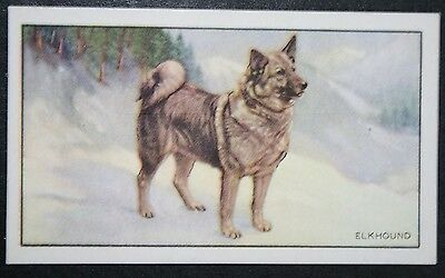 ELKHOUND   Original 1930's Vintage Illustrated Card  # VGC