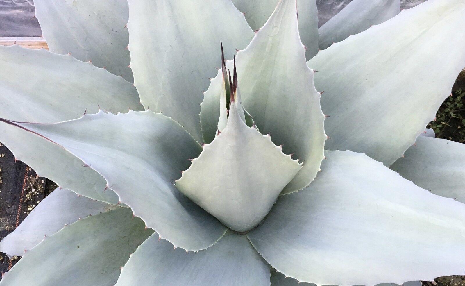 Sias Cactus and Succulents
