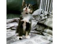 Beautiful kittens available 💖