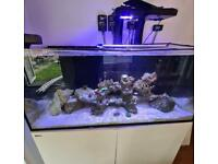 Complete Red Sea Reefer marine tank (reduced for today 30th)