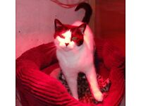 Kitty is looking for a loving new owner