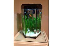 Beutiful fish tank 30 litre