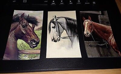 3 Small Magnet Set Horse Head Art Beautiful Bay Gray Chestnut Thoroughbred+