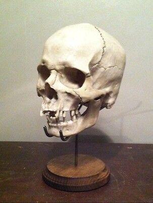 SKULL NOT INCL Real Authentic Human Skull Skeleton STAND Display Oddity Bones