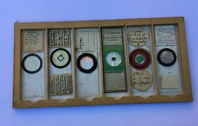 Early 20th century microscope slides of entomology & diverse nature subjects