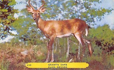 Elko Nevada~Deer~Grant's Cafe Greetings 1952 Rembrant Publisher Postcard