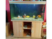 Rena fish tank and stand plus extras