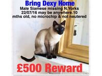 Missing siamese