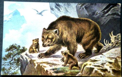 48293 Ak Bear Family Before Rock Cave Bears