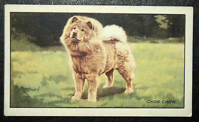 CHOW CHOW        Original 1936 Vintage Illustrated Card