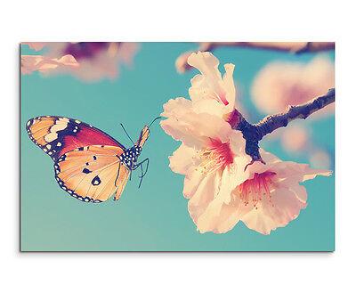 Schmetterling auf Kirschblüte Wandbild auf Leinwand in verschiedenen Größen ()