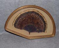 Antico Ventaglio Piume Uccello Con Cornice Dorata Anni '40 -  - ebay.it