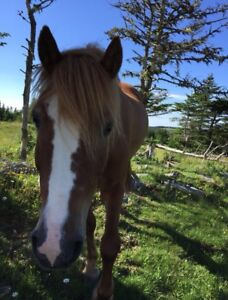 Horse looking for a new home!