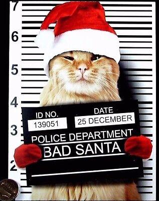 Orange Kitten Cat Santa Hat Mugshot Police Lineup - Christmas Greeting Card NEW ()
