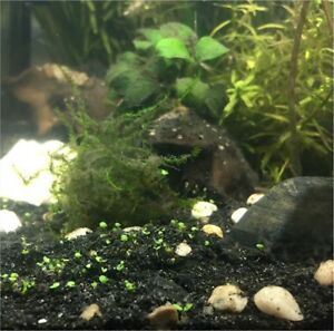 Aquarium plants for sale!!!