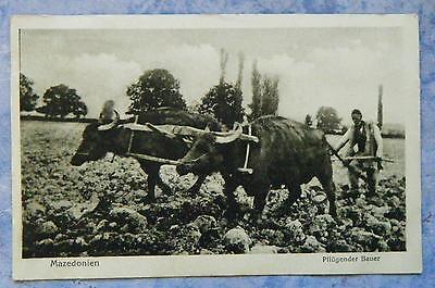 alte AK Pflügender Bauer Nutztiere Mazedonien Europa Nr. 173232 um 1920