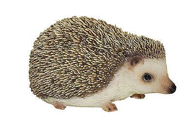 Vivid Arts - PET PALS WILDLIFE PET & HEDGEHOG BOX - Pygmy Hedgehog