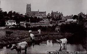 Market-Drayton-St-Marys-Church-Cattle
